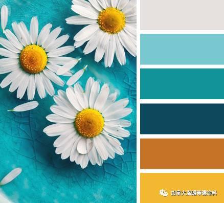 来自大自然的色彩灵感——植物篇
